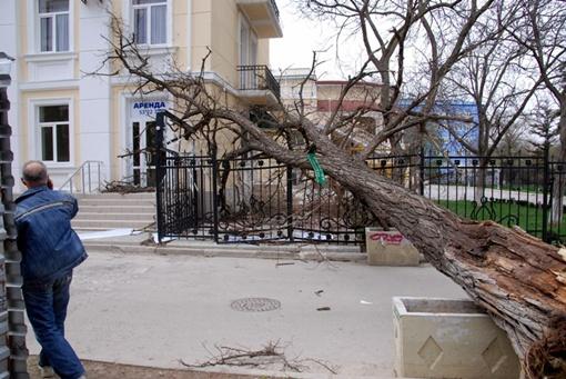 """Одно из деревьев повалилось на забор гостиницы """"Украина"""" в центре Симферополя"""