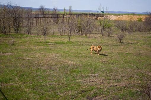 """""""Фишка"""" """"Тайгана"""" в том, что звери здесь живут в естественных природных условиях. Фото Сергея ТАРАДАЕВА."""