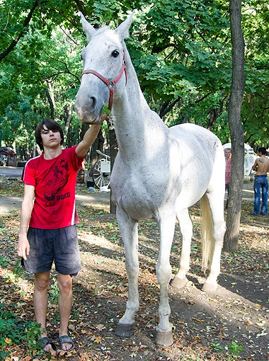 За лошадкой с парада хорошо смотрят, а поджарая она - потому что порода такая. Фото  Алексея КРАВЦОВА.