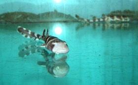 Фото - Севастопольский аквариум пополнился маленькими акулятами.