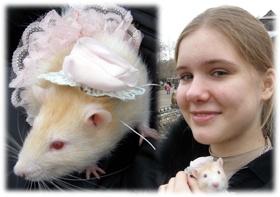 Самым красивым грызуном признан крыс Майки.
